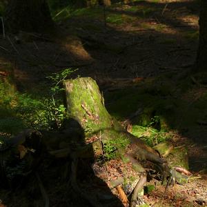 Les - zátišie 6
