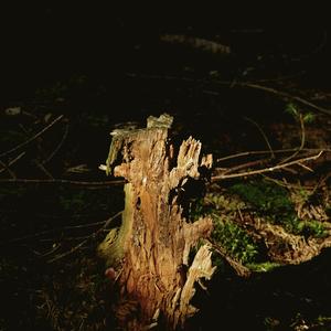 Les - zátišie 4