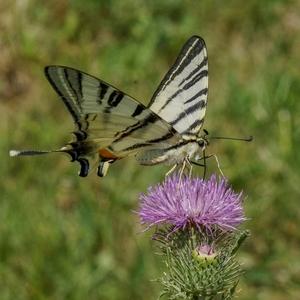 Na lúke - motýlik 2