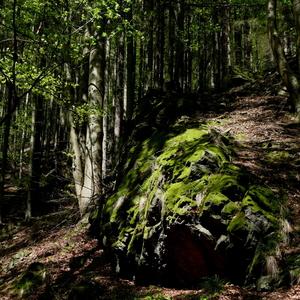 Les - zátišie 22