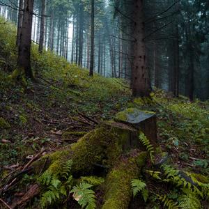 Upršaný deň v lese