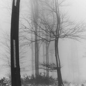 lesná diaľnica