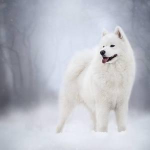 Zimní královna