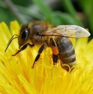 Veľkonočná včielka