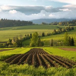 Zemiakové pole