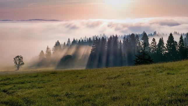 Svetlohra v hmle