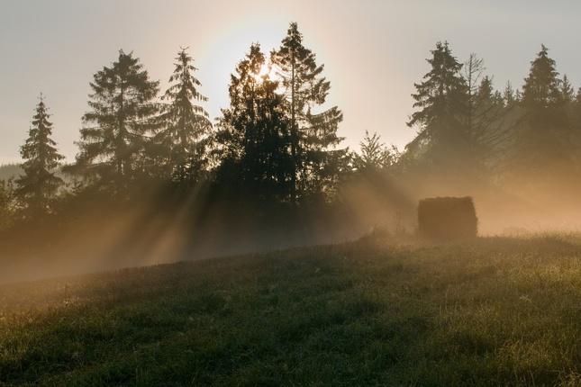 Ráno pod lesom