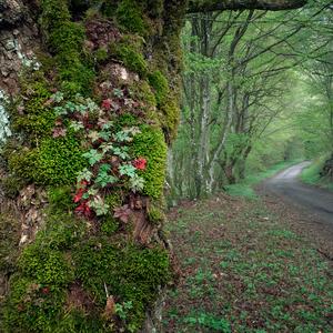 V lese na jar