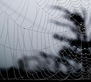 Keď pavúk zatiahne záclonu