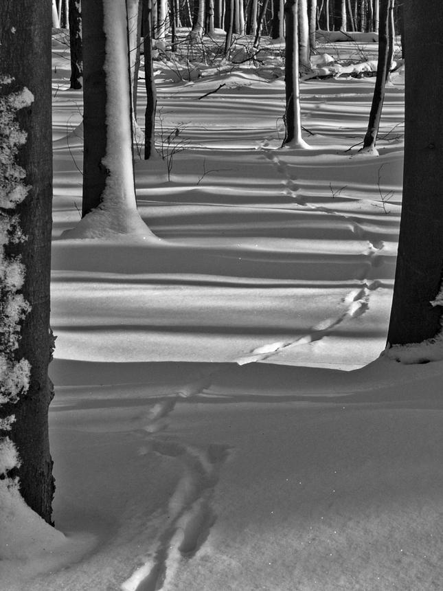 Zimná cestička