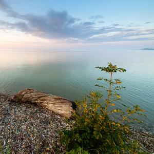 Ráno pri Dunaji II.