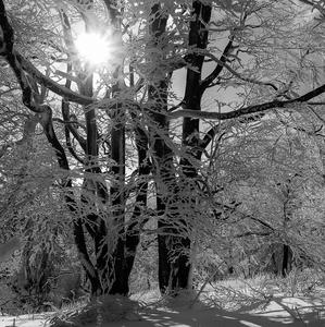 Zima v Karpatoch (pri Vysokej)