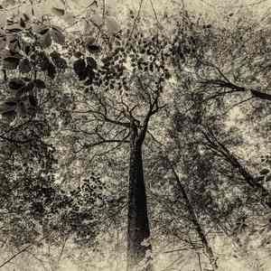 Lesný portrét 1