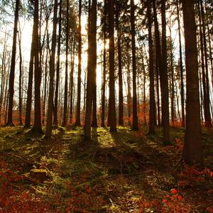 Farby lesa