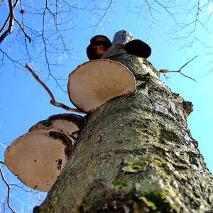 Život na strome