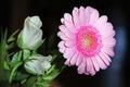Kvety k MDŽ