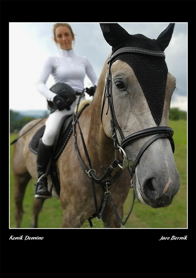 Koník Domino