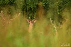 Vo vysokej tráve :)