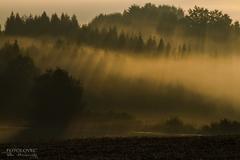 V ranných lúčoch slnka :)