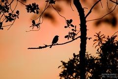 Siluetka s vtáčikom :)