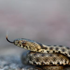 Hadie mláďa