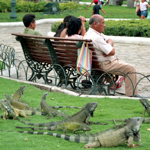 V parku