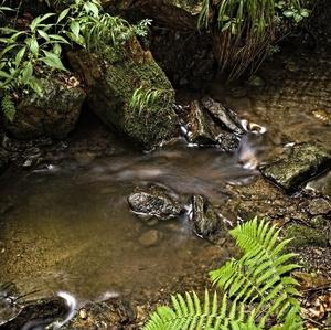 džungľa (na potoku)