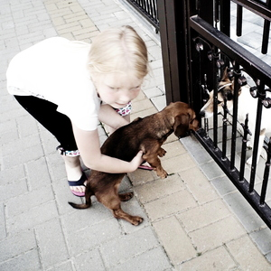 Dievča a pes