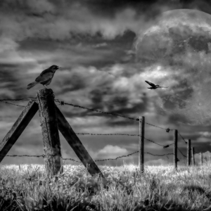 Súmrak na konci sveta