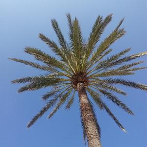 palma a modrá obloha v pozadí
