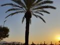 palma fotená pri východe slnka