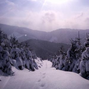 Cesta snehom