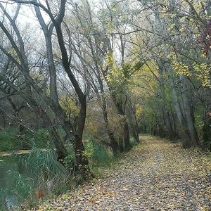 Jesen na žitnom ostrove