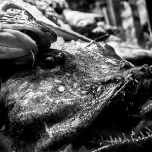 Ryba smrdí od hlavy