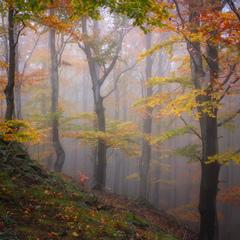 V magickom jesennom lese...