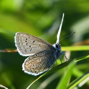 Motýliková v protisvetle