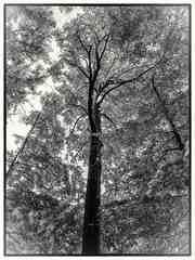 stromy 5