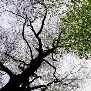 stromy 2