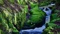 Spring creek - Wicklow Mountain
