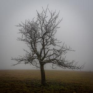 Pod rúškom hmly a chladu