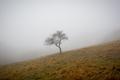 Osamelý v hmle