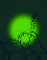 zelené slnko