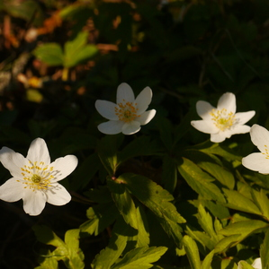 pekné biele kvety