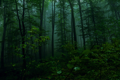 Hmlistý les