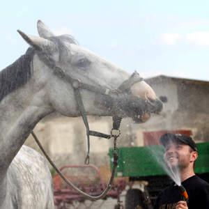 Horse shower
