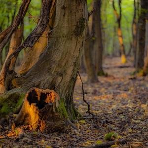 Lesy, stromy a potoky