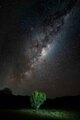 Mliečna dráha očami protinožcov