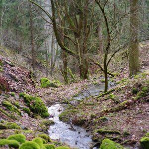 Mechy, voda stromy