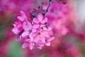 Maglia ciclamino - maglia rosa