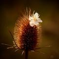Štetka s kvetom